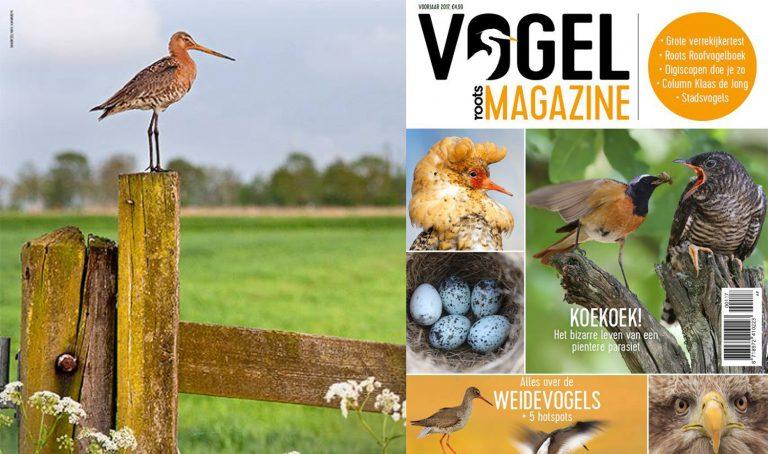Roots Vogelmagazine 2 in de winkel