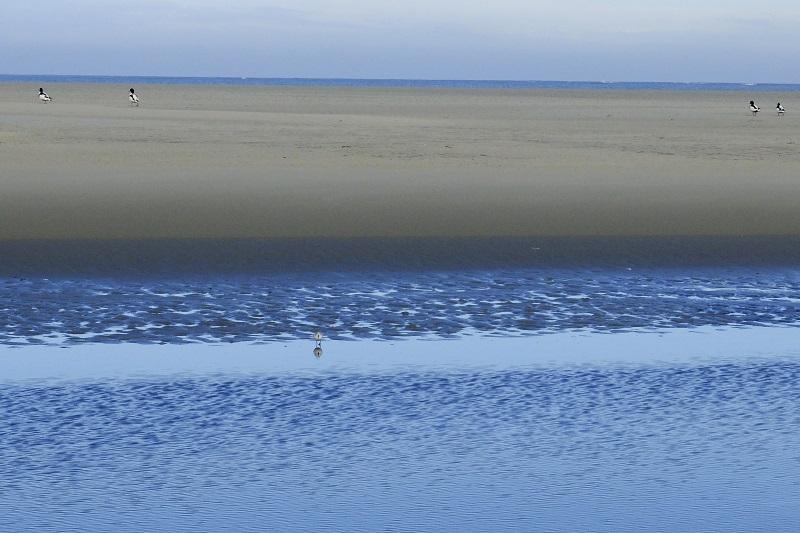Vogels Noordzeestrand