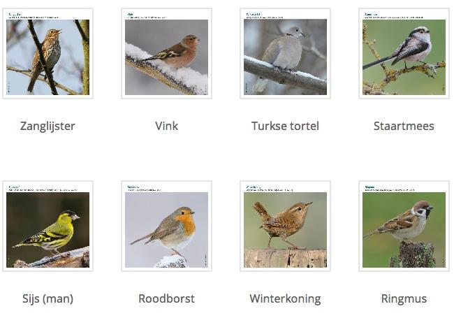 Vogeltelweekend ook in België