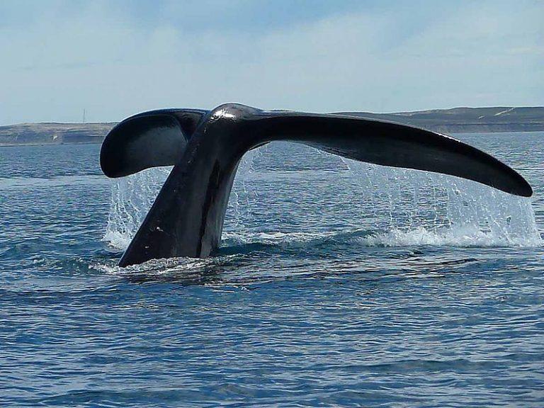 Top 10 van beste walvis-spotplekken