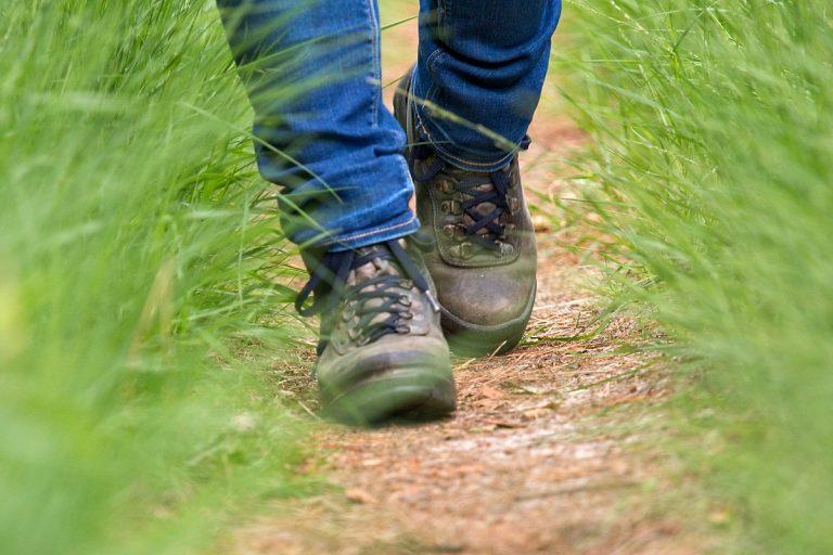 Staatsbosbeheer lanceert Boswachterspaden
