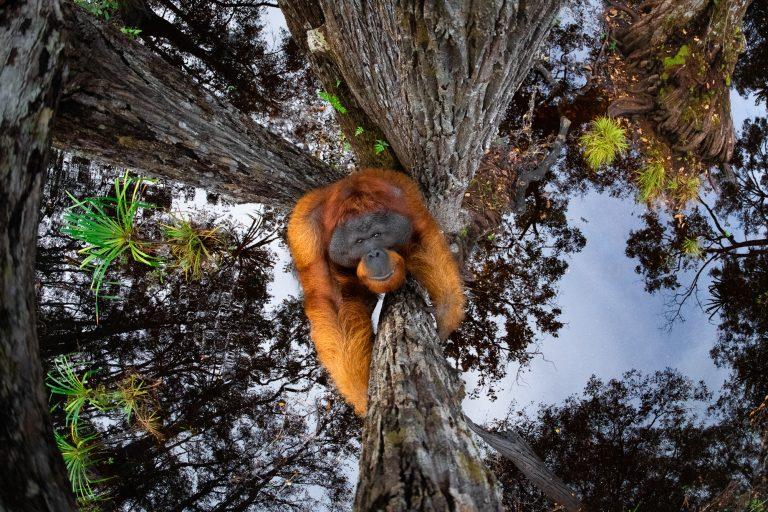 Spectaculaire foto's: de winnaars van de 'Nature TTL fotograaf van 2021' wedstrijd