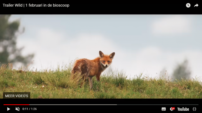 Film Wild in de bioscoop in februari