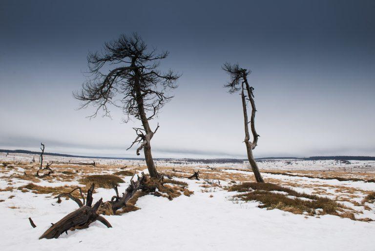 Winters landschap, Noir Flohay in de Belgische Ardennen