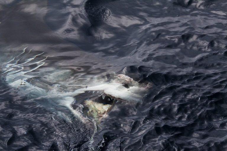 Brief van Willem de Witte Haai