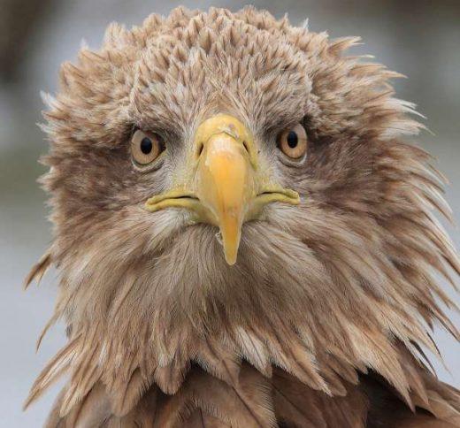 Kom naar het Roots Vogelfestival in de Biesbosch