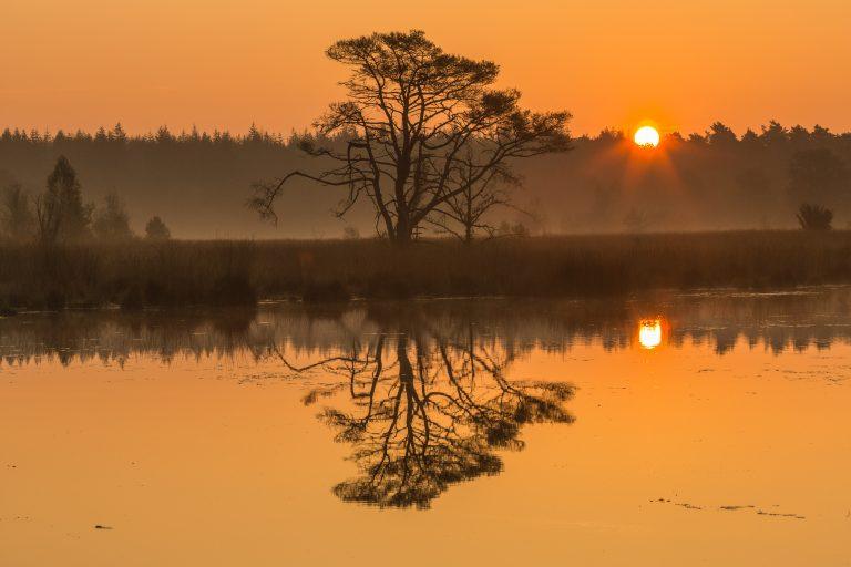 Wat een vraag: waarom zingen vogels bij zonsopgang?