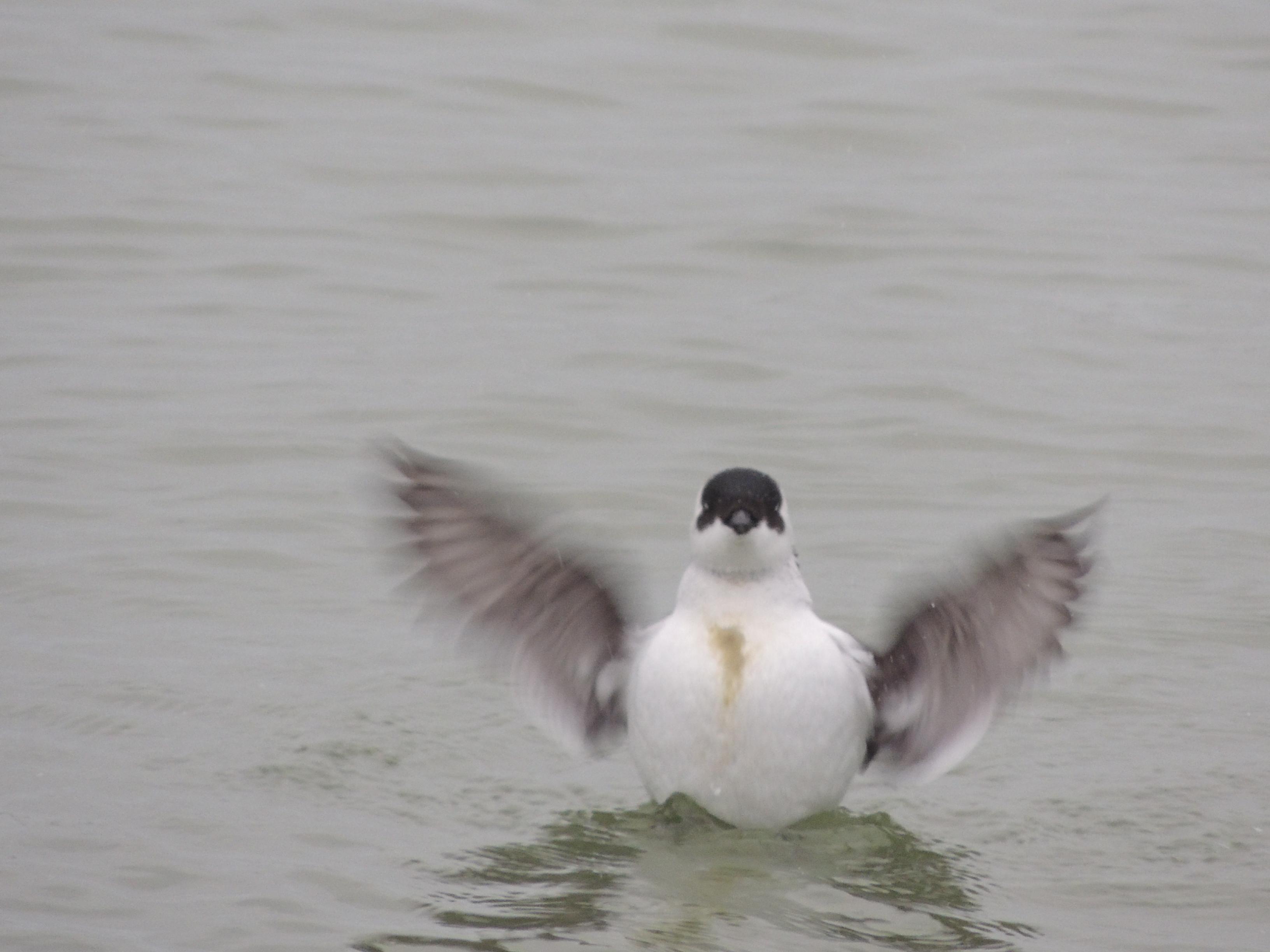 Zulke kleine vleugeltje Paul Bohre