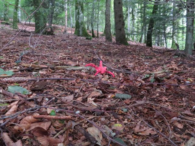 Een opvallende verschijning in het bos