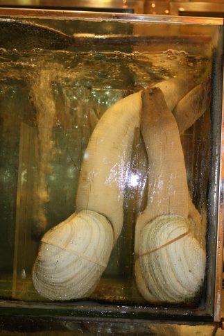10 oudste dieren: zwanenhalsmossel