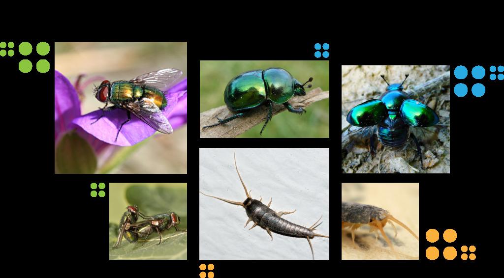 Mi legyen az Év rovara 2020-ban?