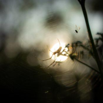 Elkapott nap
