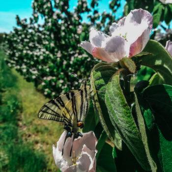 hey bro i found some nectar