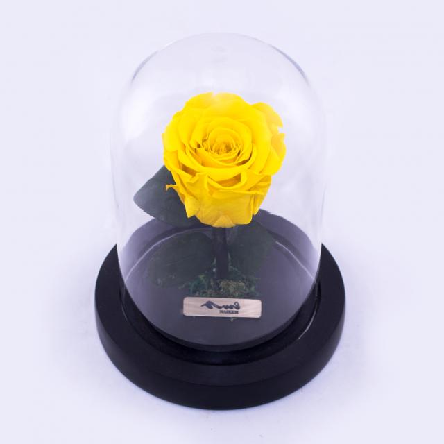 جوري معالج طبيعي أصفر حجم صغير نسيم الزهور