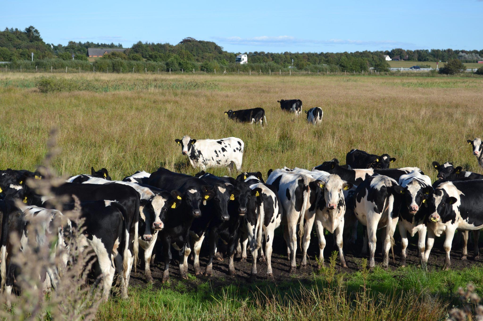 Dänemark Update #6: Blogpause und so