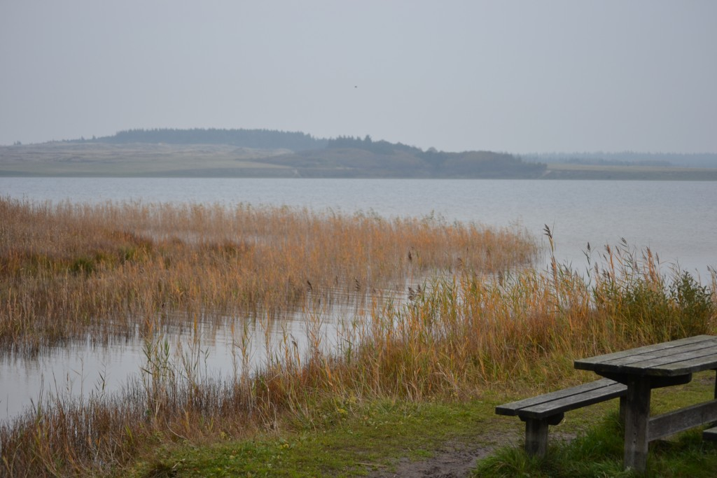 Travel Diary: Dänemark Roadtrip | Blokhus & Thy Nationalpark - DSC 0083 1024x683