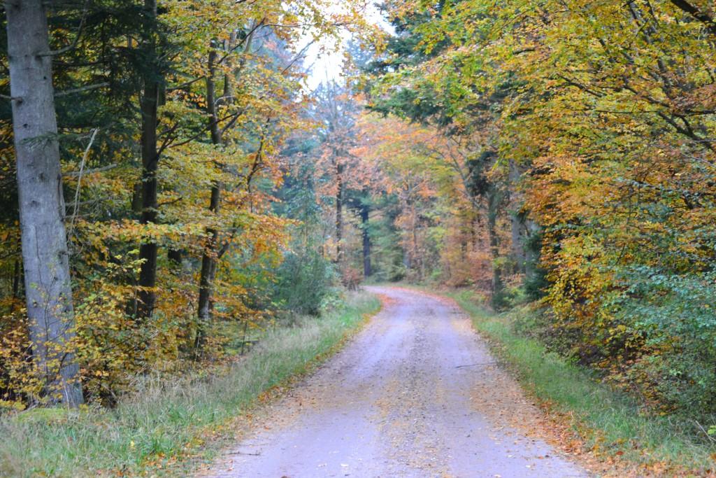 Travel Diary: Dänemark Roadtrip | Blokhus & Thy Nationalpark - DSC 0056 1024x683
