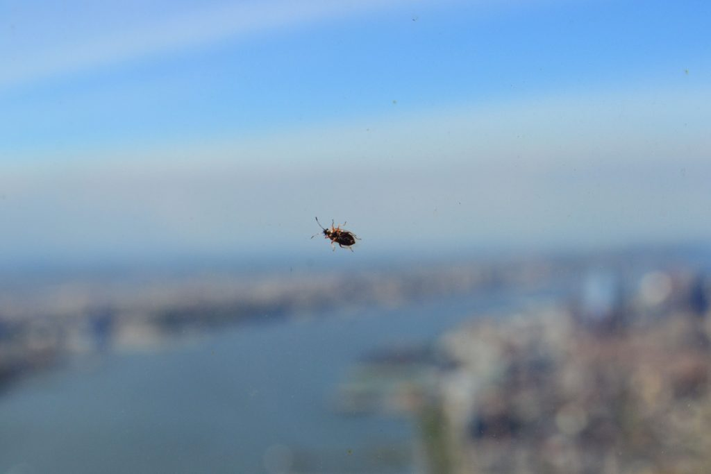 5 Foto's waar ik trots op ben | New York - One World Observatory 1 1024x683