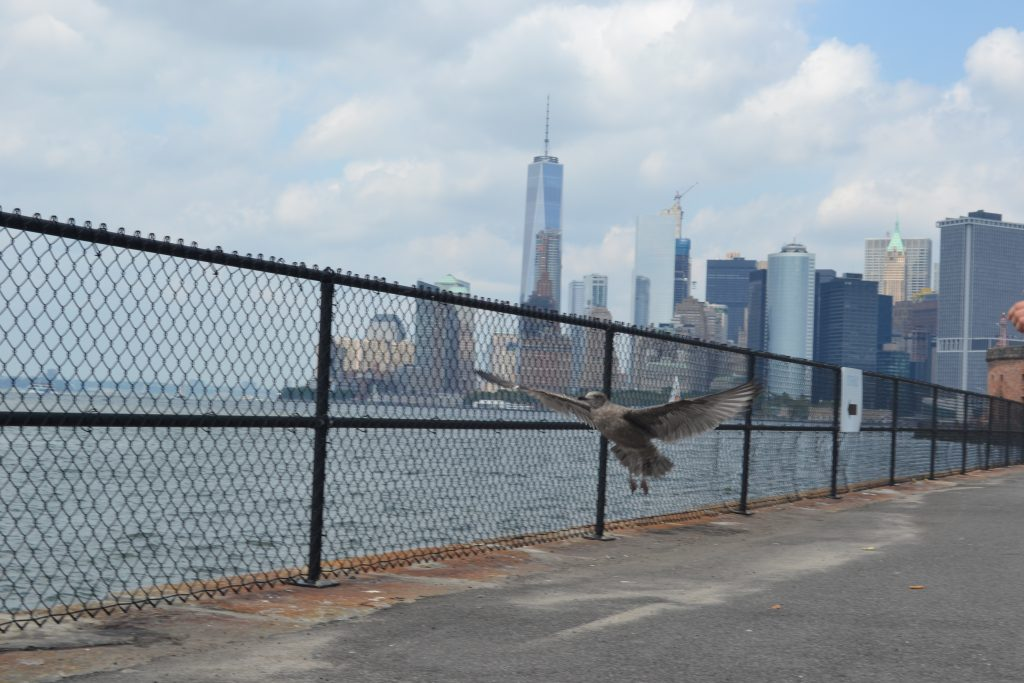 Travel Tip: Governors Island // New York - DSC 0705 1024x683