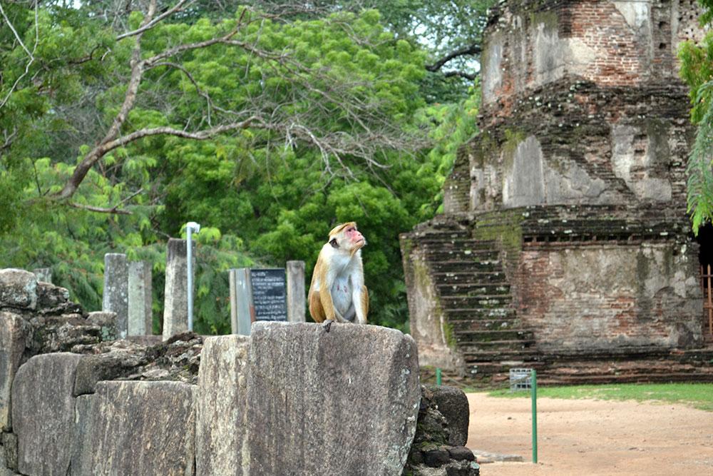 Travel Diary: Sigiriya, Polonnaruwa & Dambulla | Sri Lanka - Sri Lanka Deel 1 6