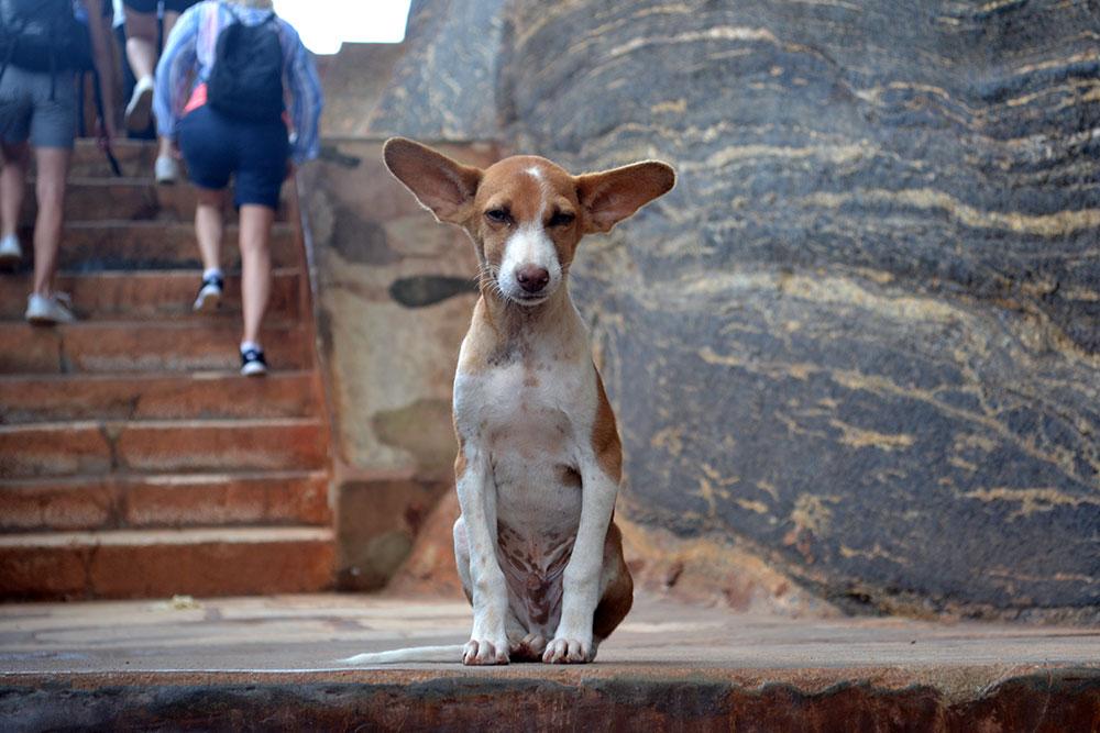 Travel Diary: Sigiriya, Polonnaruwa & Dambulla | Sri Lanka - Sri Lanka Deel 1 11