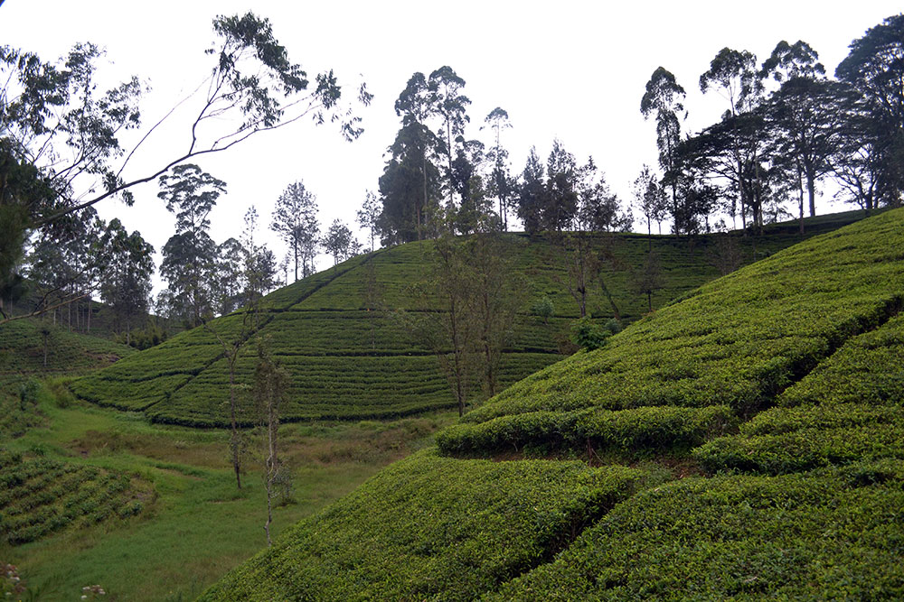 Travel Diary: Nuwara Eliya | Round Trip Sri Lanka Part Three - NuwaraEliya 4
