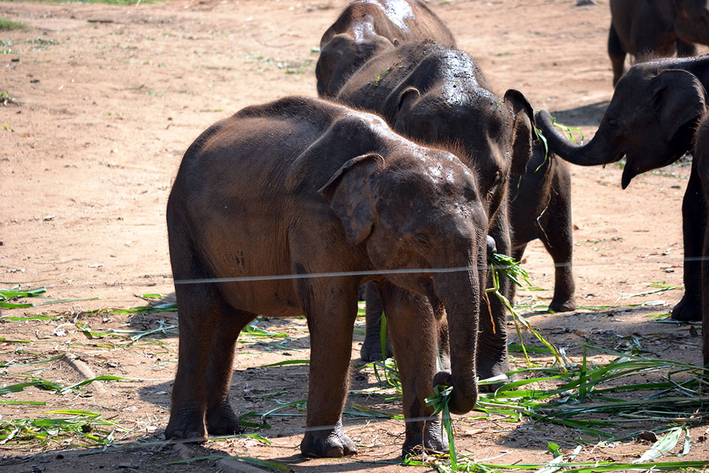 Travel Diary: Yala National Park | Round Trip Sri Lanka Part Four - Yala 4