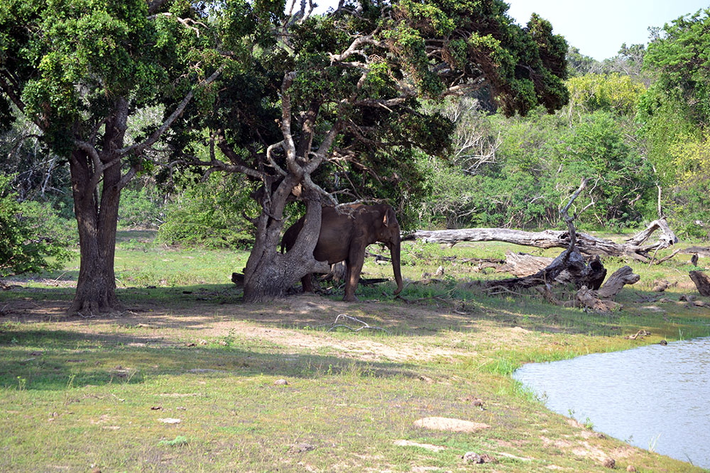 Travel Diary: Yala Nationalpark | Sri Lanka - Yala 13