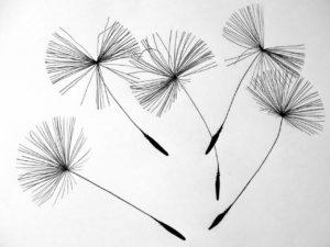 seeds-641520_1280