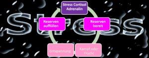 Stresskreislauf