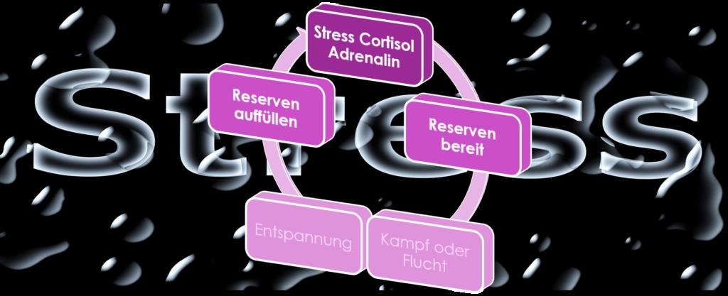Die Stress Hormone