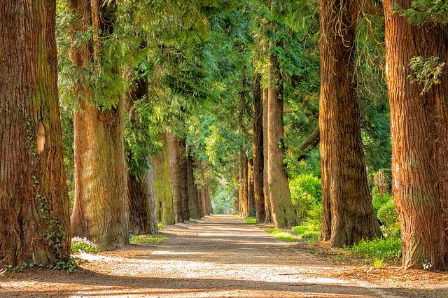 7 Schritte für mehr ERFOLGE – der ErfolgBremsenLöser Weg