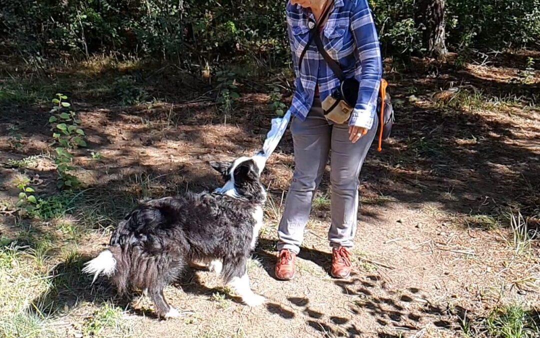 """Noch 9 Wochen bis Silvester – überlege dir das """"Anstatt""""-Verhalten, welches deinem Hund liegt"""