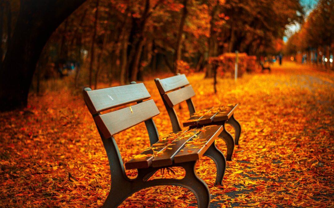 Entdecke die Farbe im tristen November?