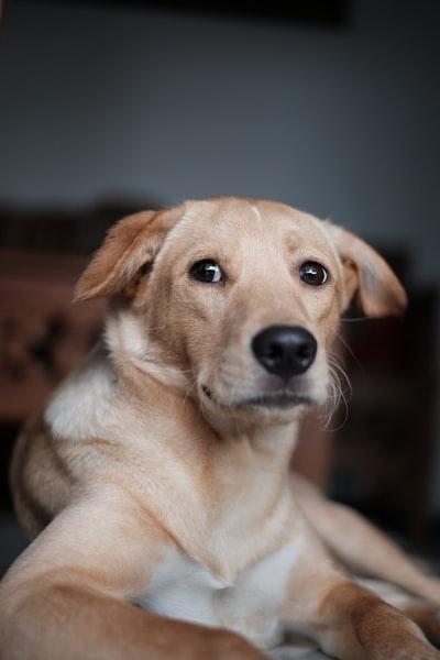 Tierhomöopathie und Verhalten – wie wir Tiere sehen