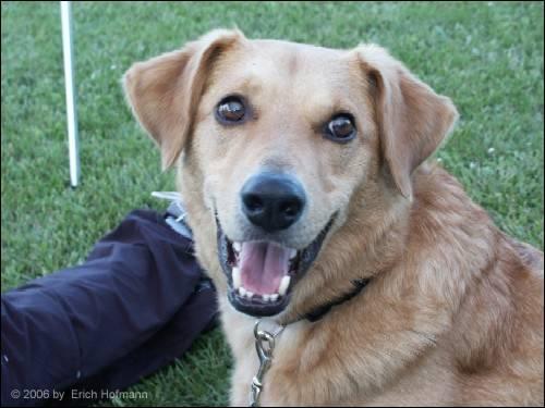 Mein Masterplan, Hundetrainerin zu werden – die Verwirklichung eines Traumes durch gute Planung