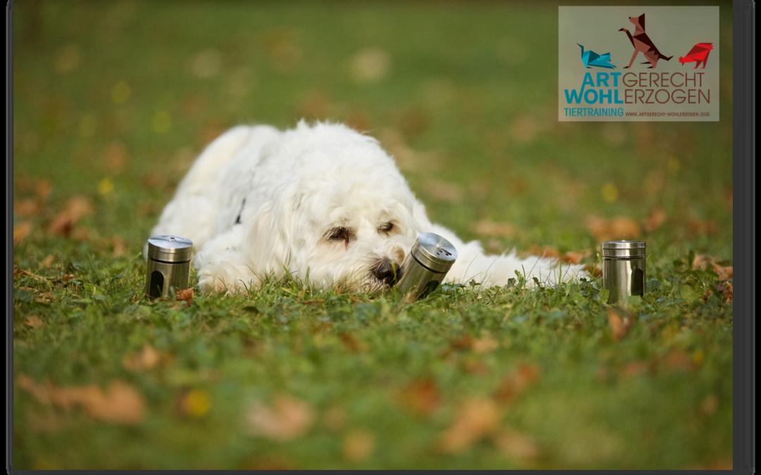 Das Anzeigeverhalten im Hundetraining – eine der wichtigsten Vorübungen für Unterscheidungsaufgaben