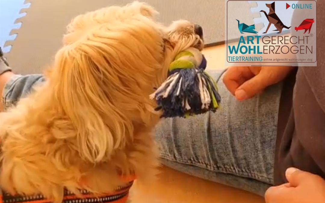 Exaktheit im Hundetraining – der Klick-Trick