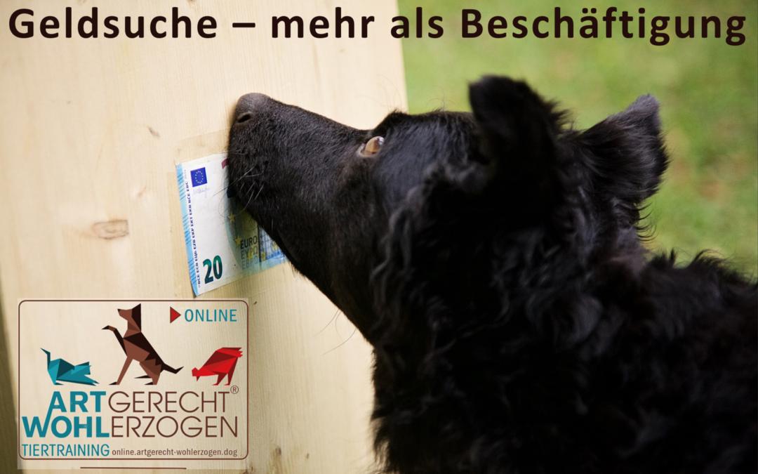 Geldsuche für Hunde – die Suchaufgabe für Spaß und Echteinsatz