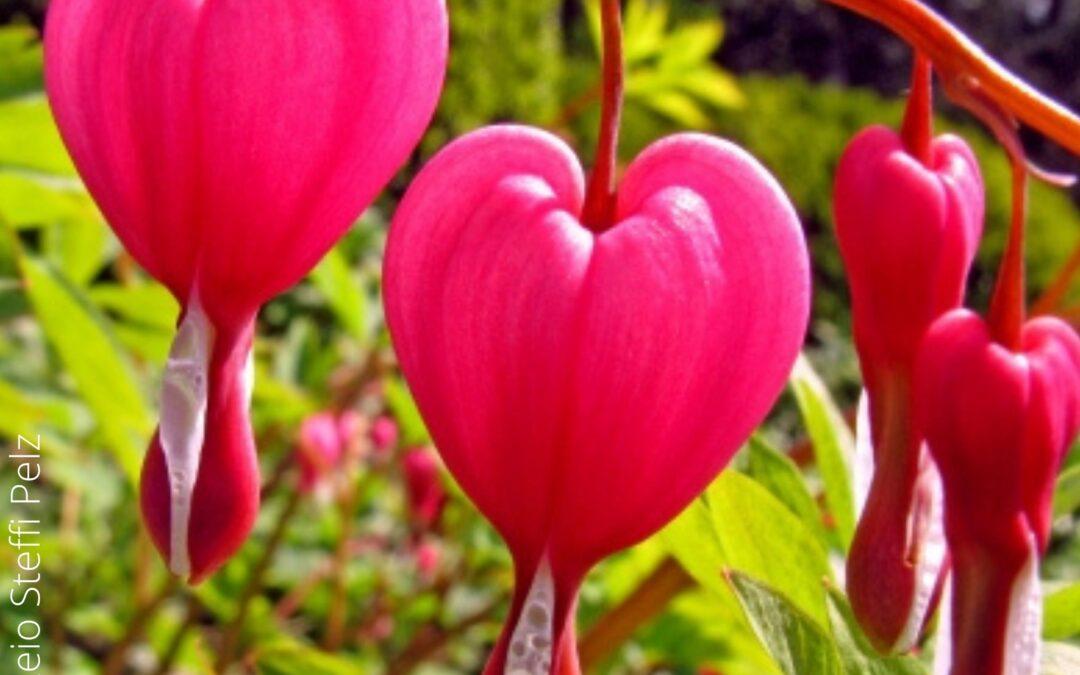 Neuer Podcast: Traumatisierung und Herzerkrankungen