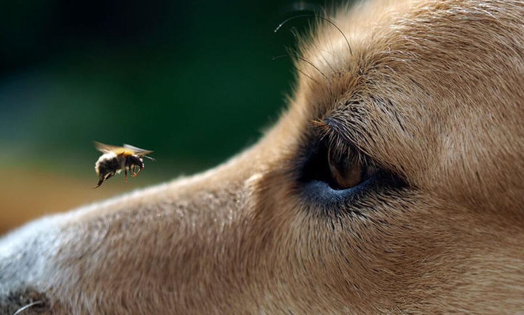 Homöopathie für Hunde – Teil 3 – Was summt denn da?