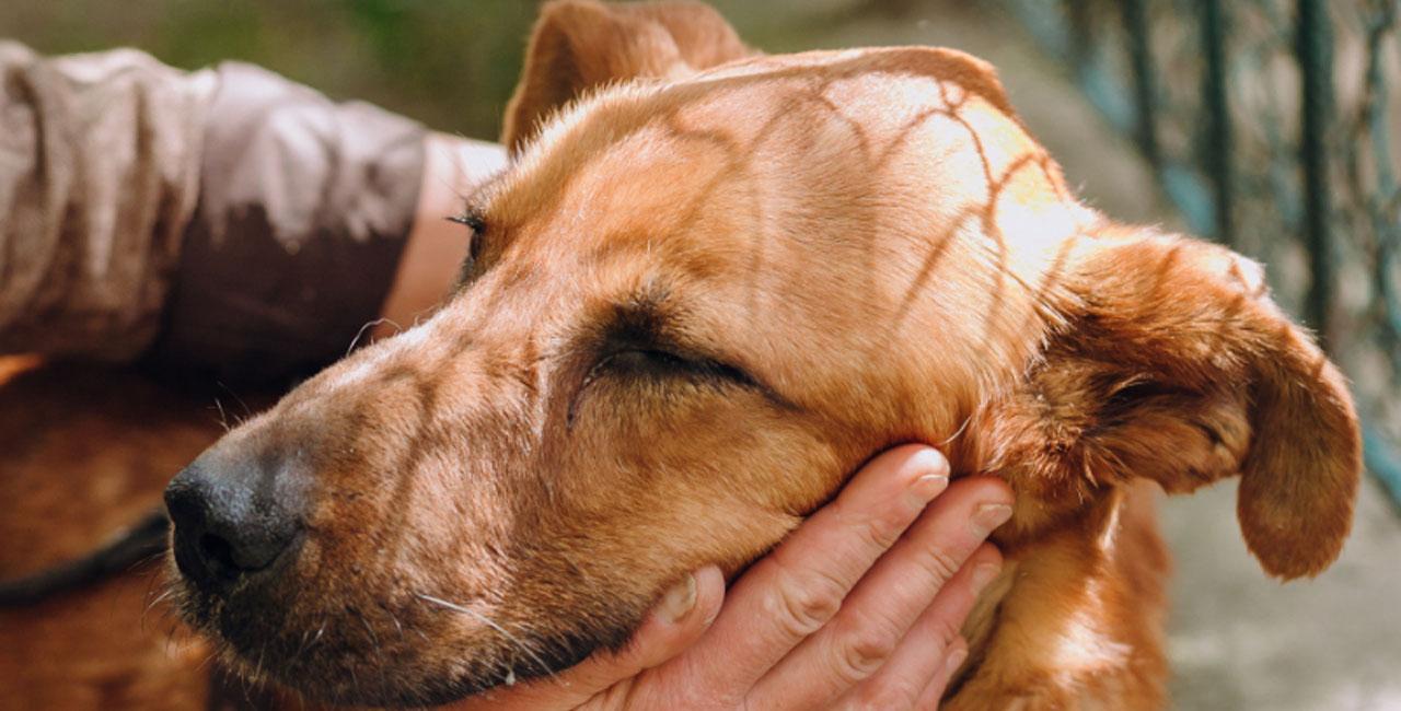 Homöopathie für Hunde – Teil 1 – Schreck lass nach …