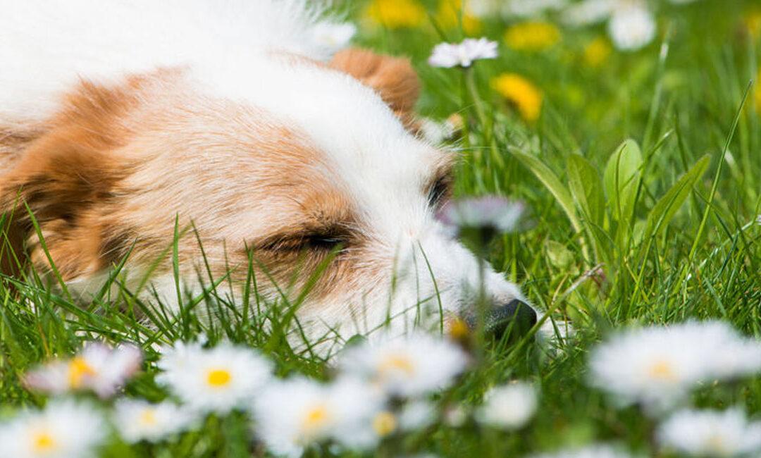 Homöopathie für Hunde – Teil 2 – Nach dem Zusammenstoß …