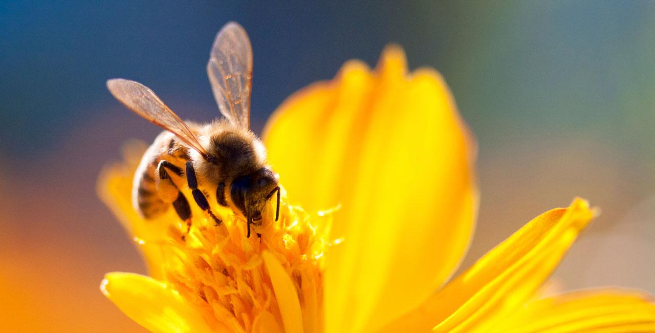 Starthilfe für Bienen und Hummeln