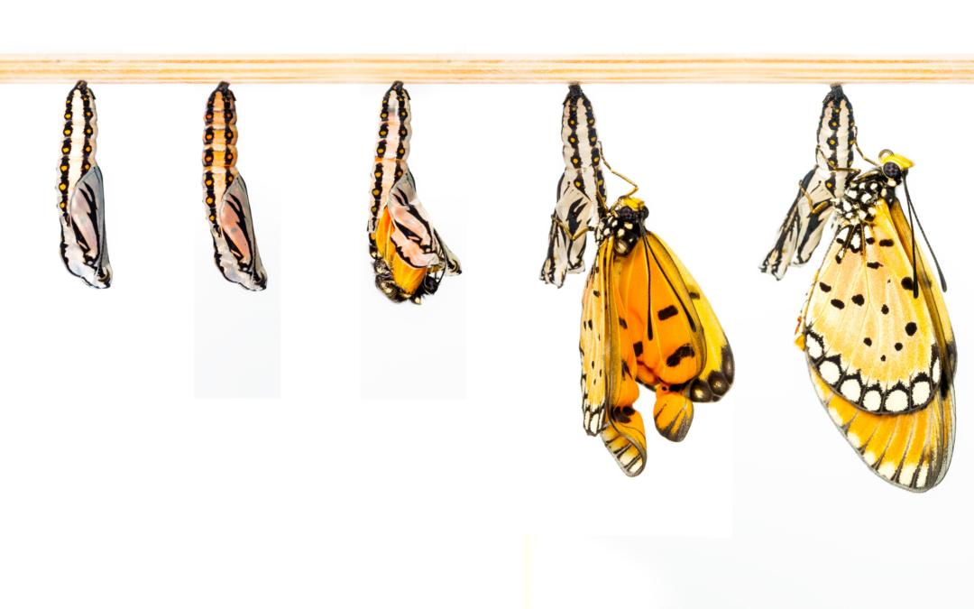 5 Beispiele einer gelungenen Transformation