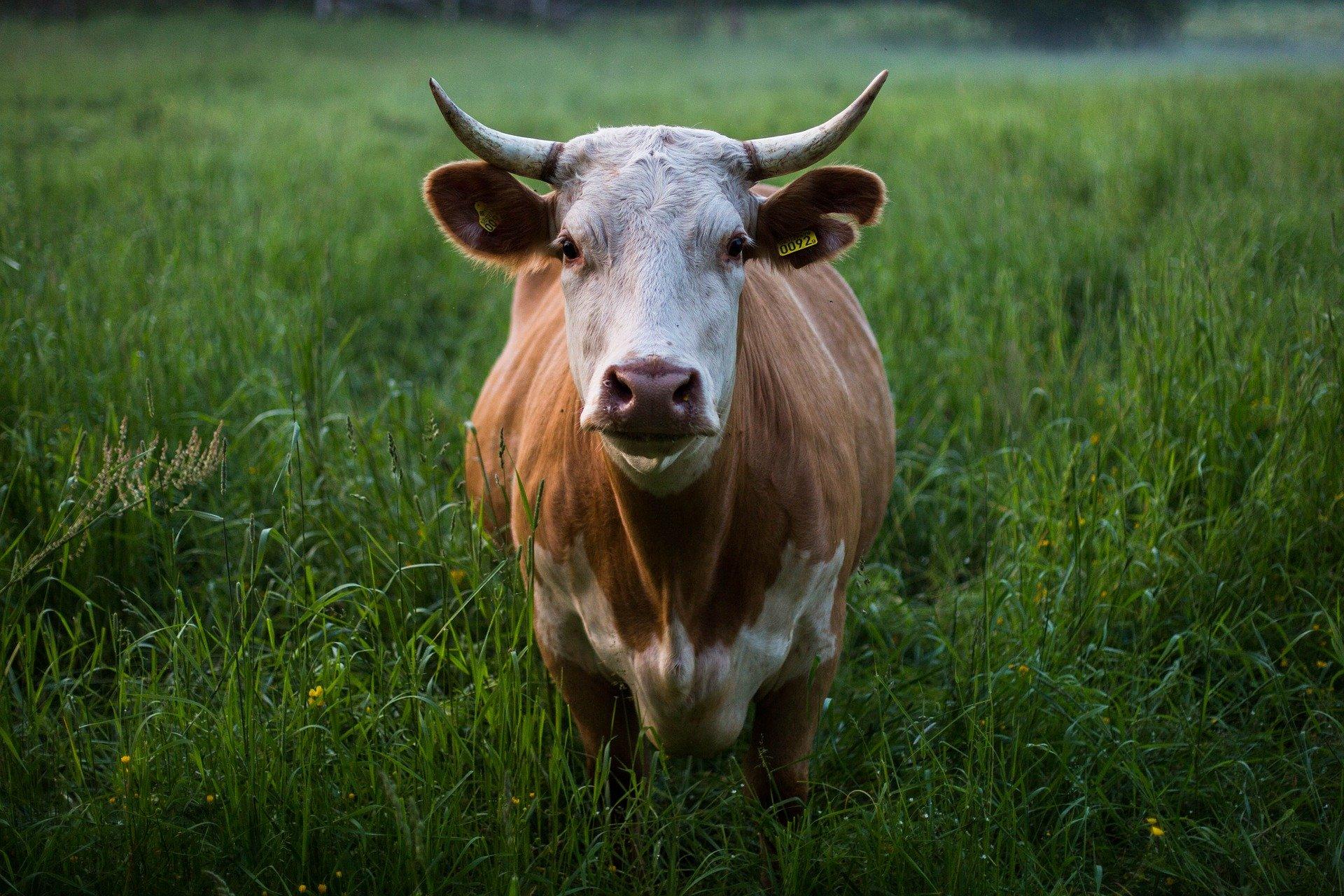 Ist rotes Fleisch gesundheitsschädlich?