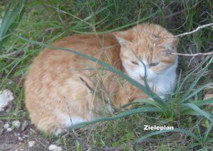 In der Ruhe liegt die Kraft und was wir von Katzen darüber lernen können