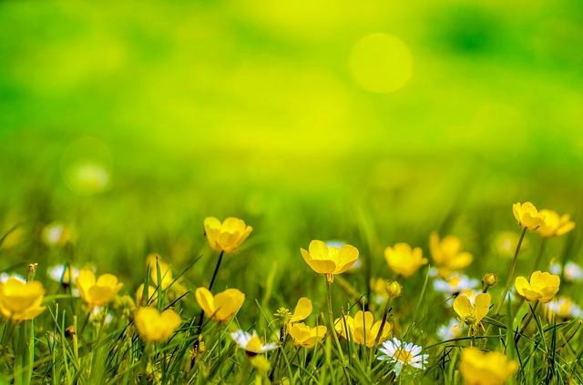 Was ist der Schöpfergarten? (aktualisiert im Mai 2019)