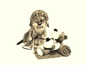 Gut zu wissen: Angst beim Tierarzt muss nicht sein