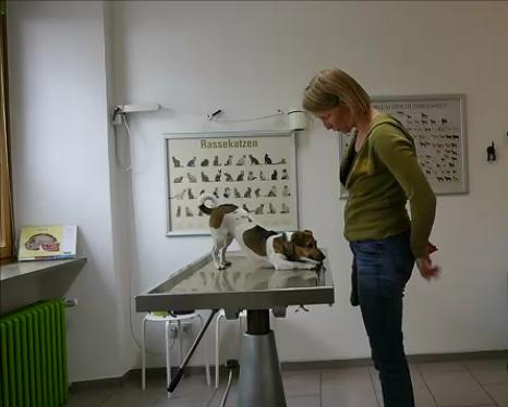 Medical Training – Die umfassende Ausbildung für Mensch und Tier